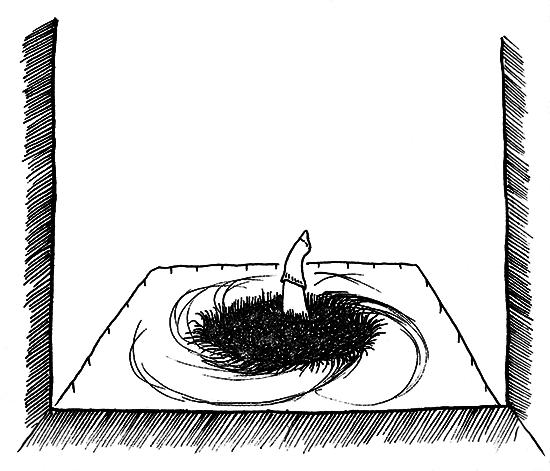 Det sorte hul - DenLilleSorte.org